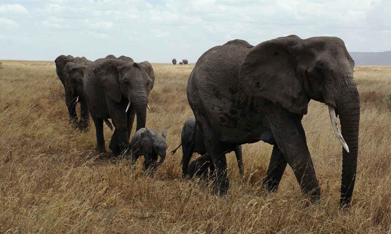 Serengeti National Park - Tanzania
