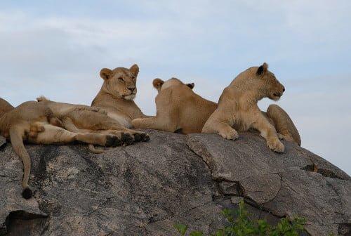 Overland Tours Tanzania