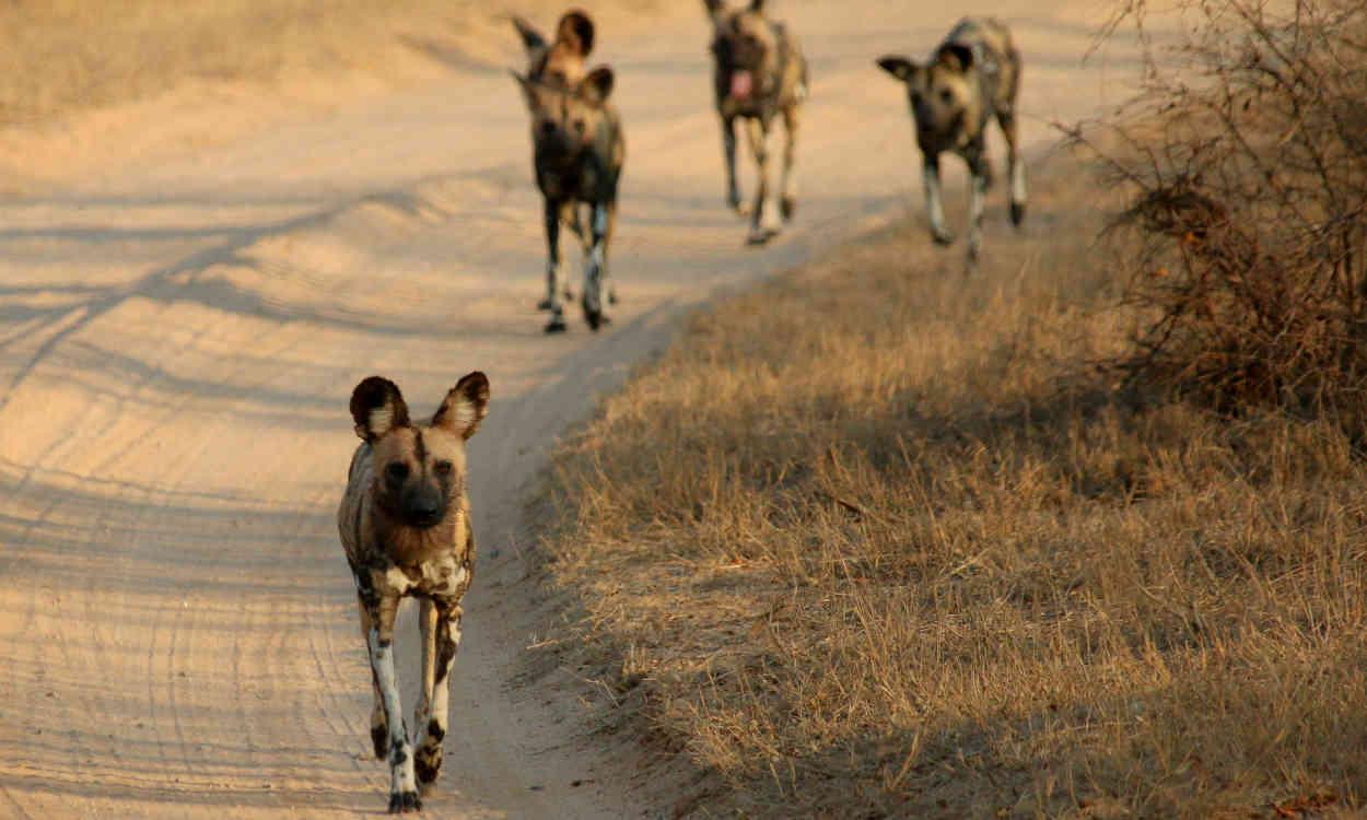 Kruger Park - South Africa